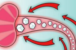 Расшифровка результатов биохимии крови на глюкозу