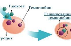 Как сдавать анализ на гликированный гемоглобин