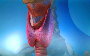 Щитовидной железы при сахарном диабете