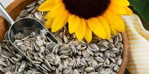 Можно ли есть семечки при диабете: польза и вред
