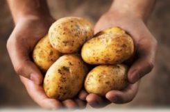 Картофель при сахарном диабете 2 типа: как готовить