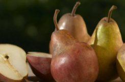 Можно ли есть груши при сахарном диабете: рецепты