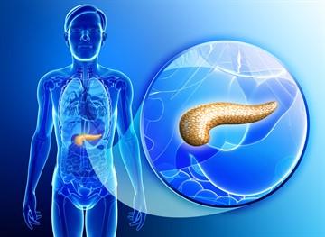 Гирудотерапия при сахарном диабете. Можно ли ставить пиявки при сахарном диабете