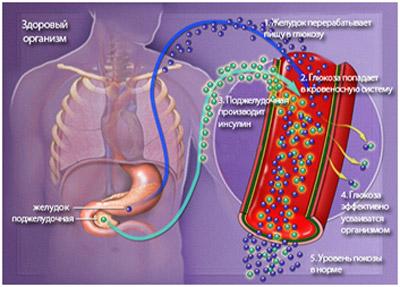 Уровень глюкозы в крови поддерживают гормоны