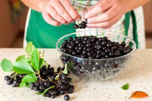 Черноплодная рябина полезна ли при сахарном диабете