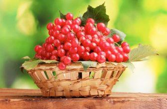 Калина при диабете 1 и 2 типа: польза, вред, противопоказания, рецепты