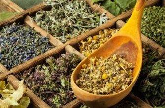 Травы от диабета 1 и 2 типа: применение, лечение, рецепты