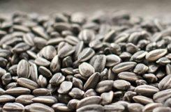 Польза и вред семечек при сахарном диабете