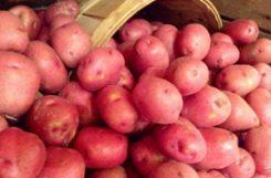 Можно ли есть картофель при сахарном диабете? Возможные последствия