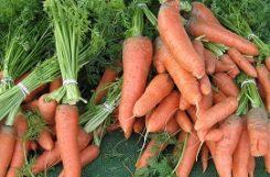 Можно ли есть морковь и пить морковный сок при сахарном диабете?