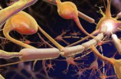 Диабетическая полинейропатия нижних конечностей: лечение препаратами, физиопроцедурами и народными средствами